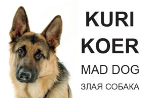 kuri koer saksa lambakoer - mad dog
